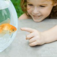 Punya Peliharaan Bisa Mengajarkan Tanggung Jawab Pada Anak