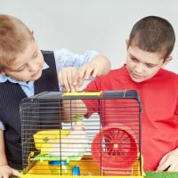 Aturan Anak Ajak Teman Main ke Rumah