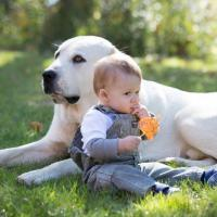Aturan Penting Si Kecil Boleh Bermain Dengan Binatang Peliharaan